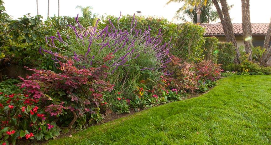Santa Barbara Planting for Color