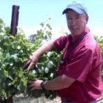 Bruce Koehler -Vineyard Design and Maintenance