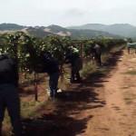 Santa Ynez vineyard management company
