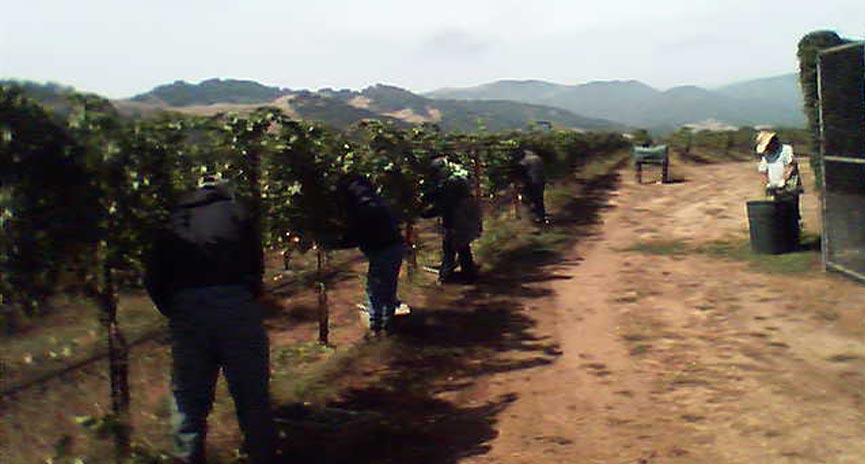 Santa Ynez vineyard management company