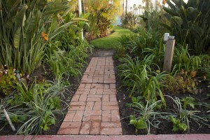 Ventura Commercial Landscape management