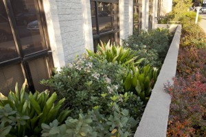 Ventura Commercial Landscape Contractors