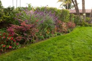Santa barbara garden design
