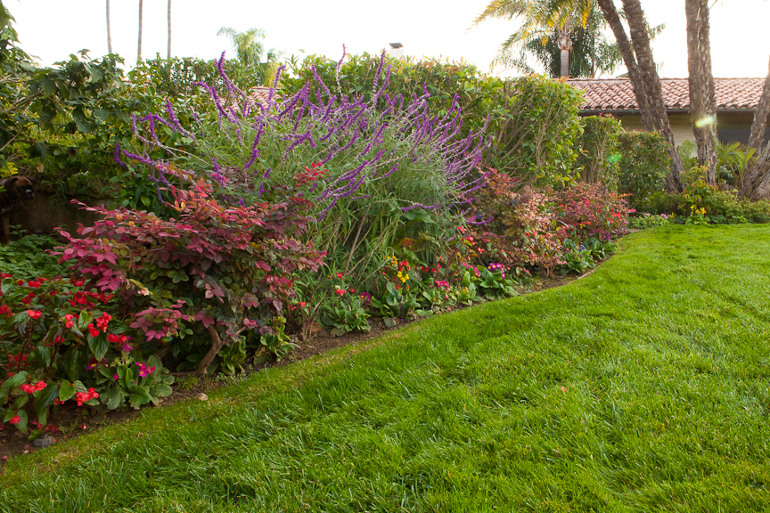 Soil amendments and low maintenence gradens santa for Creating a low maintenance garden
