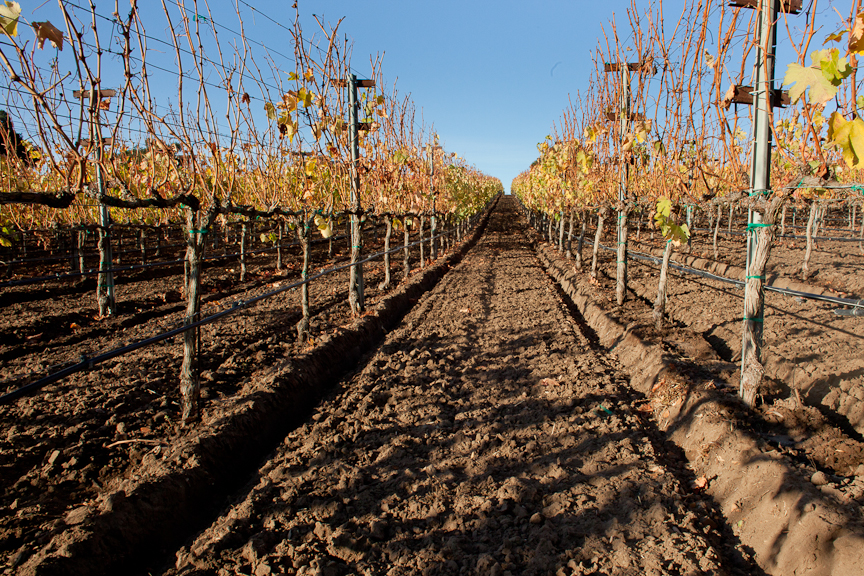 Vineyard design installation and management in santa barbara